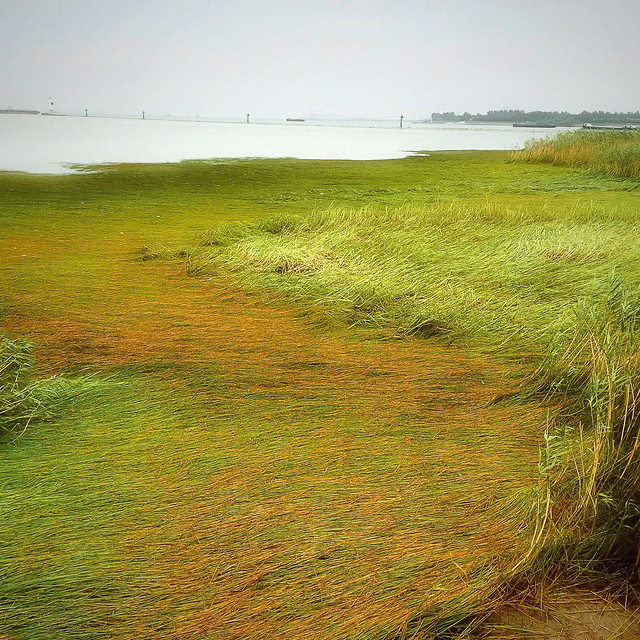 landscape-grass-nature-no-person-sky picture material