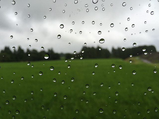 rain-dew-wet-droplet picture material