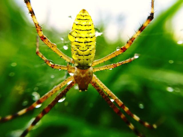 spider-insect-nature-arachnid-spiderweb picture material