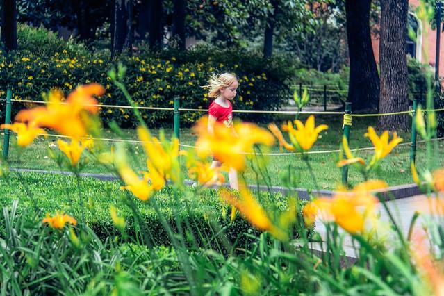 grass-garden-nature-summer-park picture material