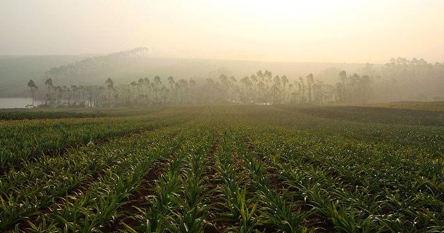agriculture-landscape-cropland-field-nature picture material