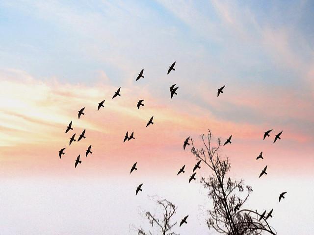 bird-flight-wildlife-sky-nature picture material