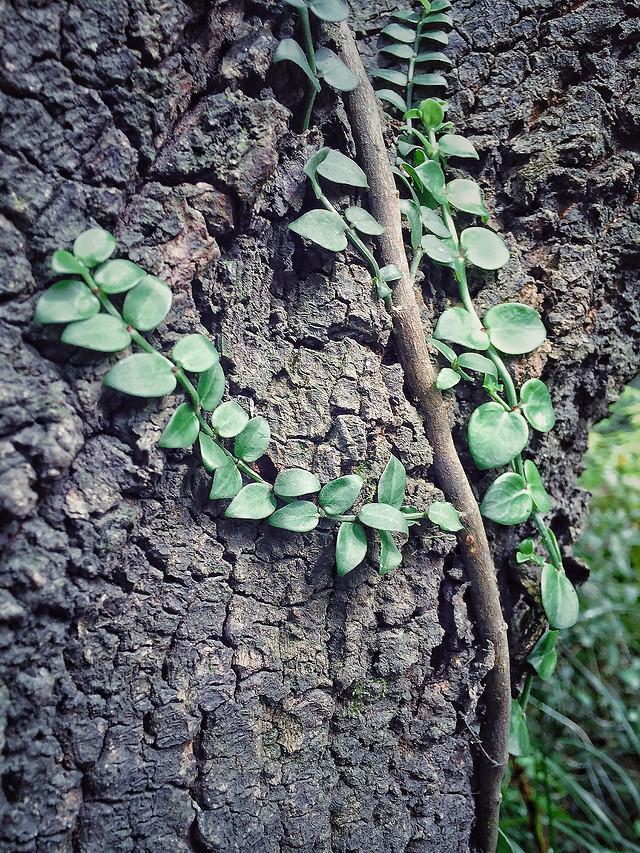 tree-flora-nature-environment-desktop picture material