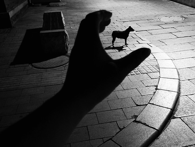 monochrome-street-people-shadow-pavement picture material