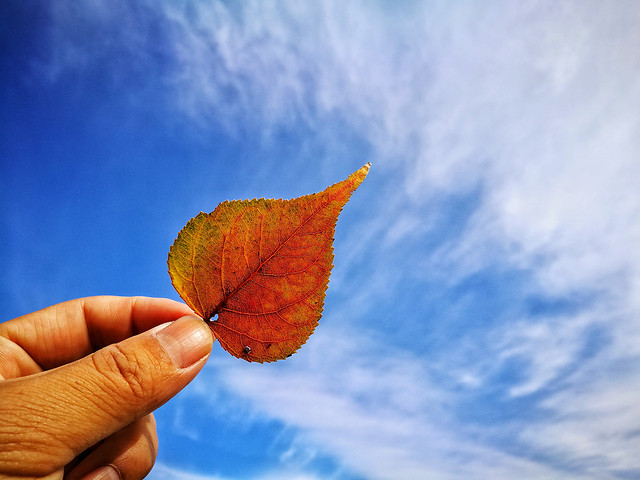 nature-leaf-environment-ecology-ball-shaped picture material