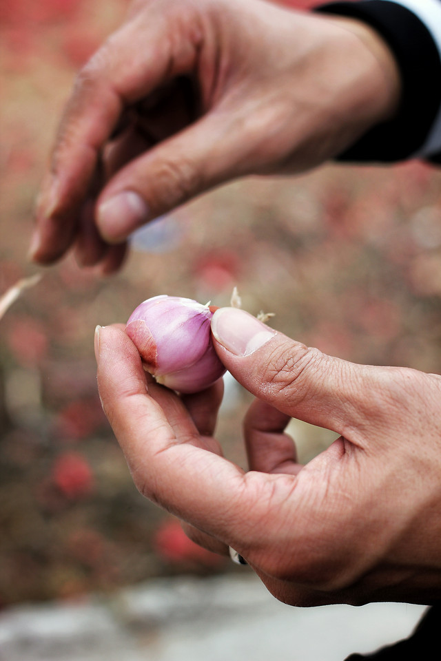 hand-food-people-woman-nature picture material
