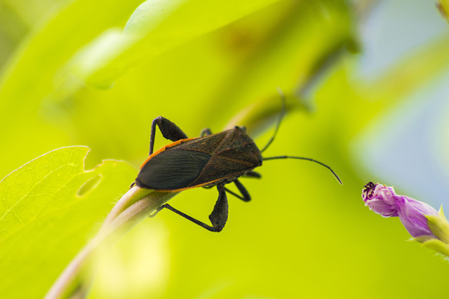 insect-nature-leaf-invertebrate-wildlife picture material