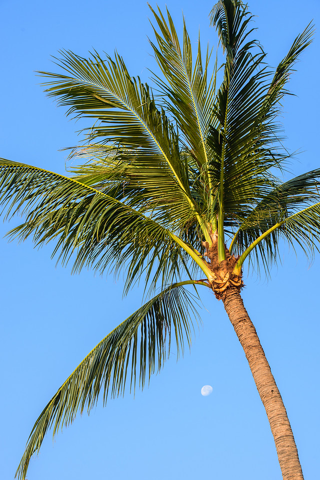 beach-palm-tropical-sky-summer picture material