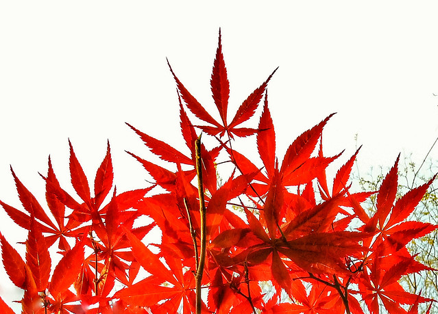 leaf-nature-flora-no-person-fall 图片素材