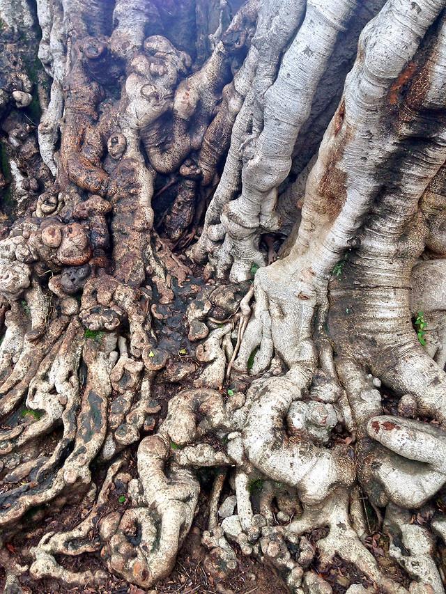 nature-tree-desktop-trunk-texture picture material