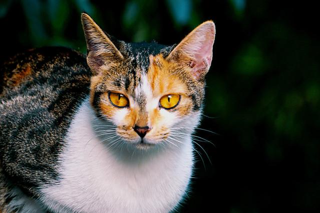 cat-cute-mammal-eye-animal picture material