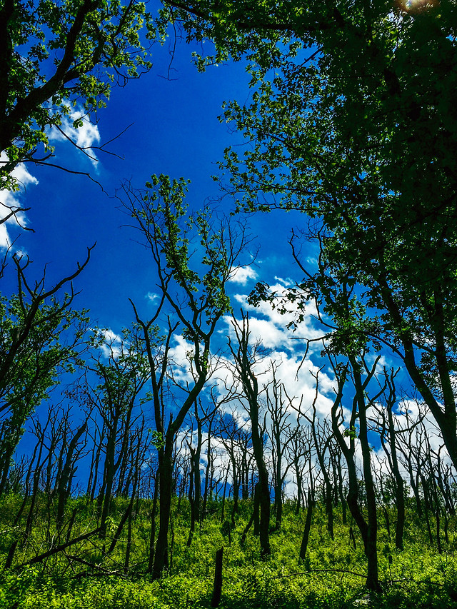 nature-tree-wood-no-person-landscape picture material