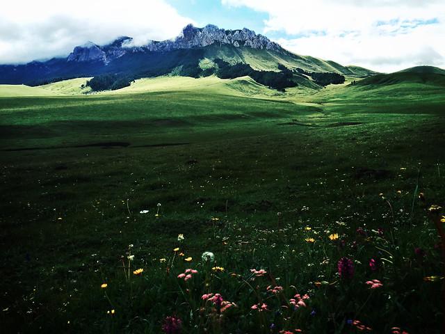 no-person-landscape-grass-nature-grassland picture material