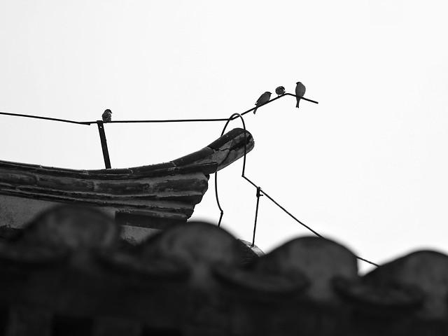 white-black-black-and-white-monochrome-photography-sky 图片素材