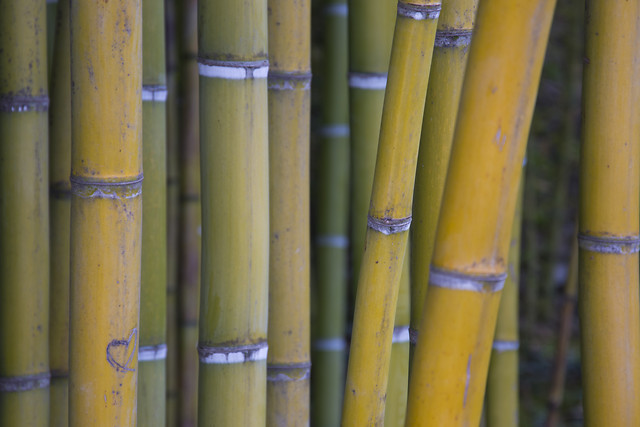 bamboo-no-person-zen-wood-art picture material
