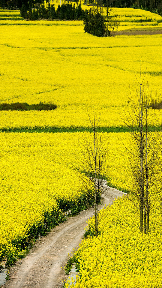landscape-field-flower-agriculture-nature picture material