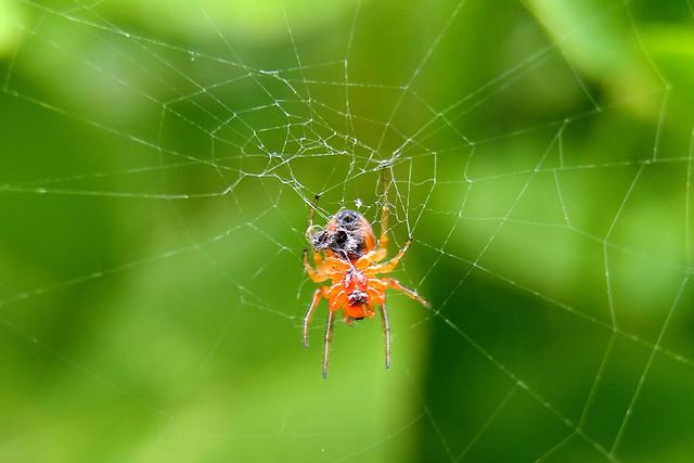 spider-arachnid-spiderweb-insect-trap picture material