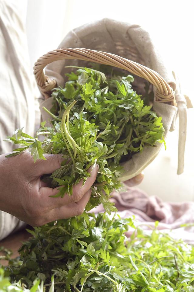 food-leaf-flora-vegetable-herb picture material