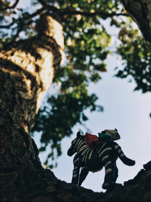 tree-outdoors-climber-climb-action picture material