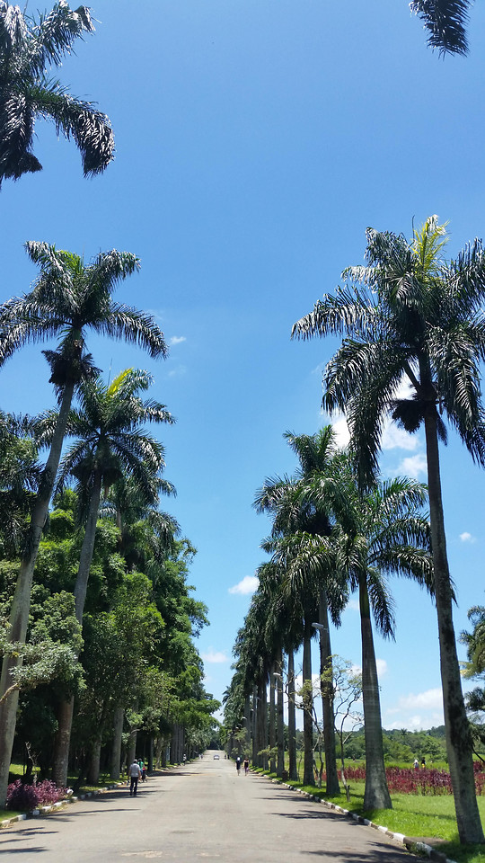 tree-palm-no-person-travel-sky picture material