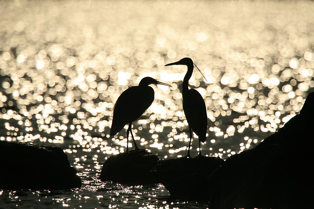 bird-wildlife-no-person-water-nature picture material
