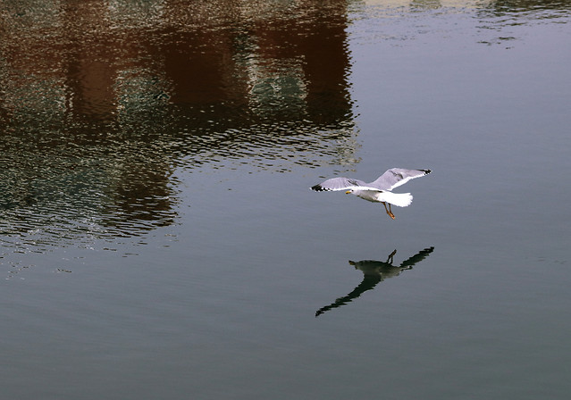 water-bird-lake-reflection-river picture material