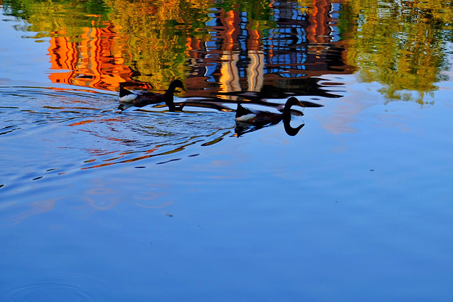reflection-water-lake-pool-river picture material