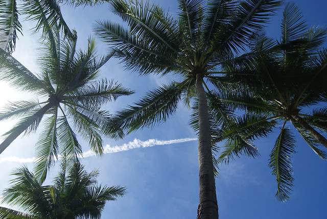 palm-tree-coconut-beach-tropical picture material