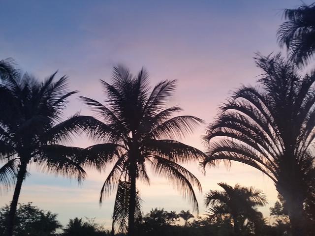 palm-tropical-beach-no-person-sun picture material