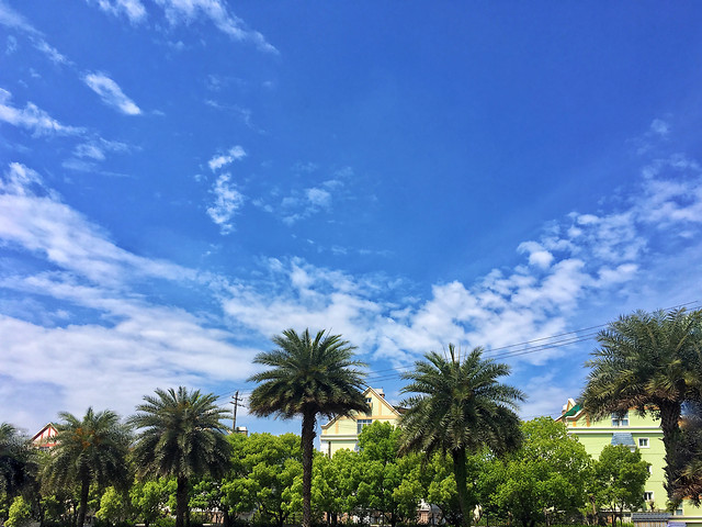 no-person-tree-sky-travel-palm picture material