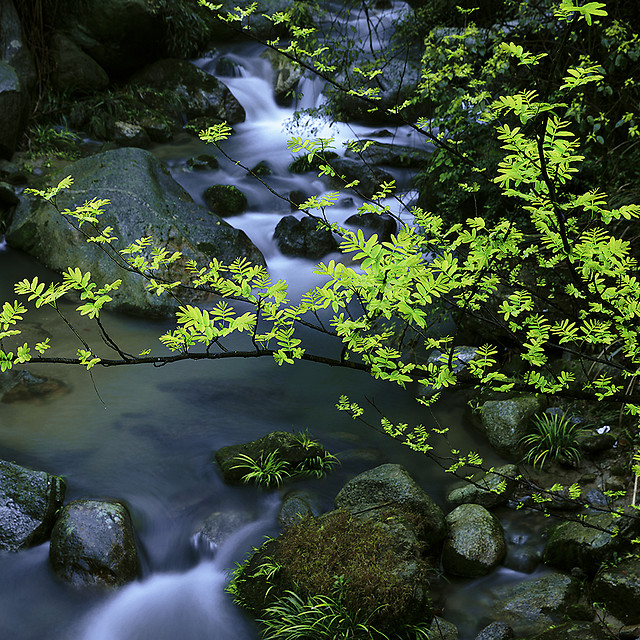 water-stream-nature-creek-river picture material