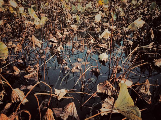 leaf-no-person-nature-fall-flora 图片素材