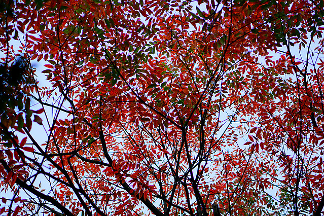 leaf-tree-fall-branch-season 图片素材