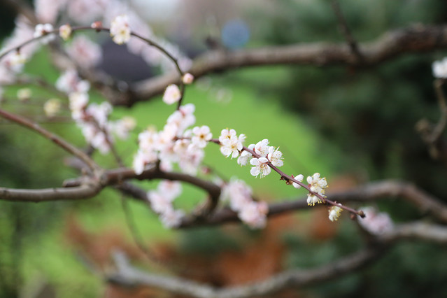 tree-flower-nature-branch-no-person picture material