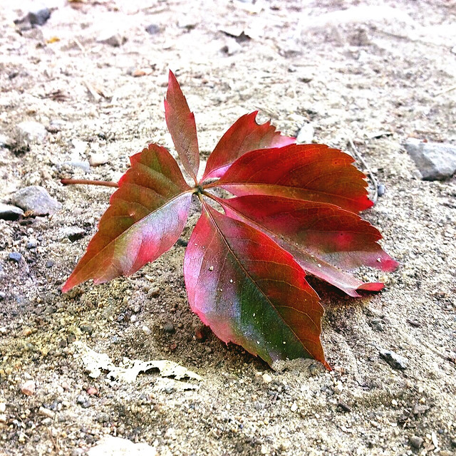 leaf-no-person-nature-fall-outdoors 图片素材