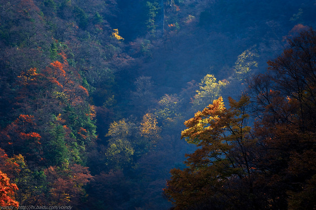 no-person-fall-tree-nature-leaf 图片素材