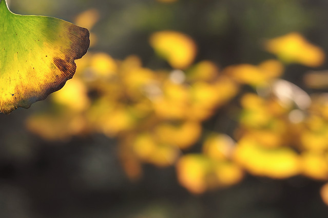 fall-nature-leaf-no-person-wood picture material