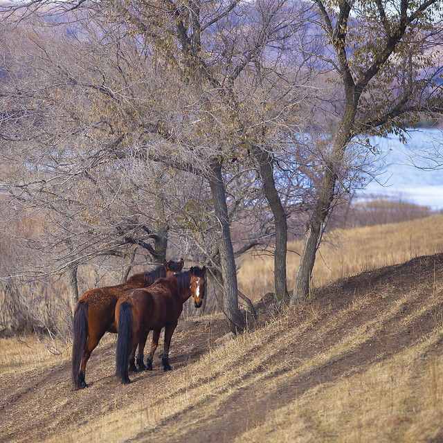 no-person-mammal-tree-cavalry-outdoors picture material