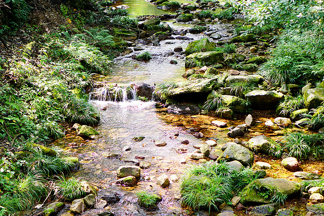 water-nature-wood-stream-river picture material