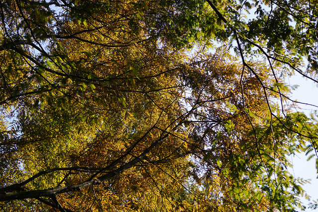 tree-leaf-wood-nature-fall picture material
