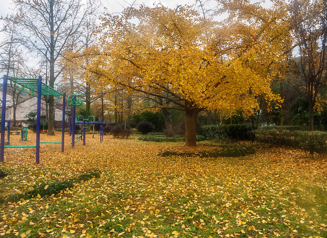 fall-tree-leaf-landscape-park picture material