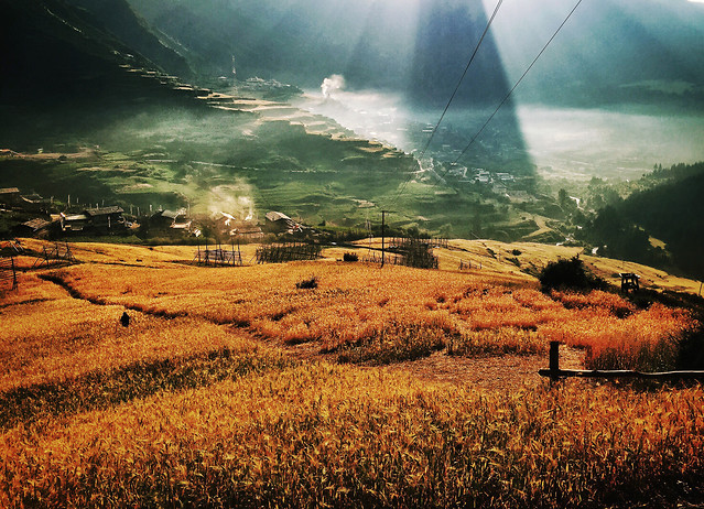 landscape-nature-agriculture-farm-field picture material