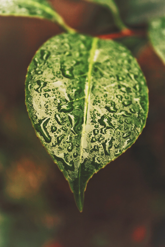 leaf-no-person-nature-flora-green picture material