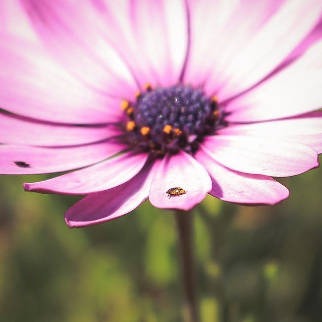 flower-no-person-nature-flora-summer picture material