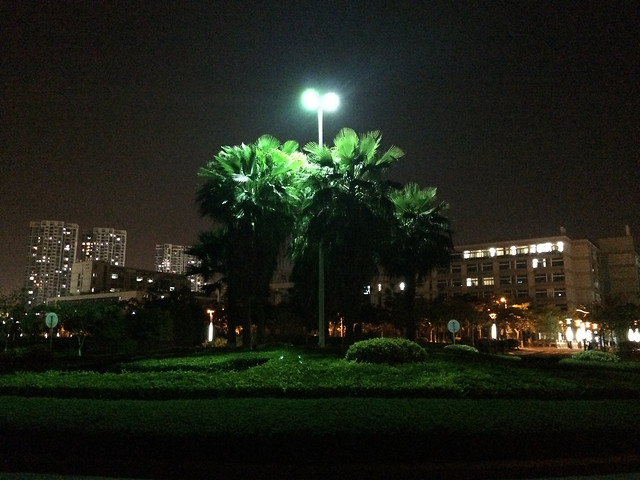 tree-city-light-street-building picture material