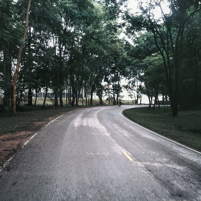 road-asphalt-tree-lane-nature picture material