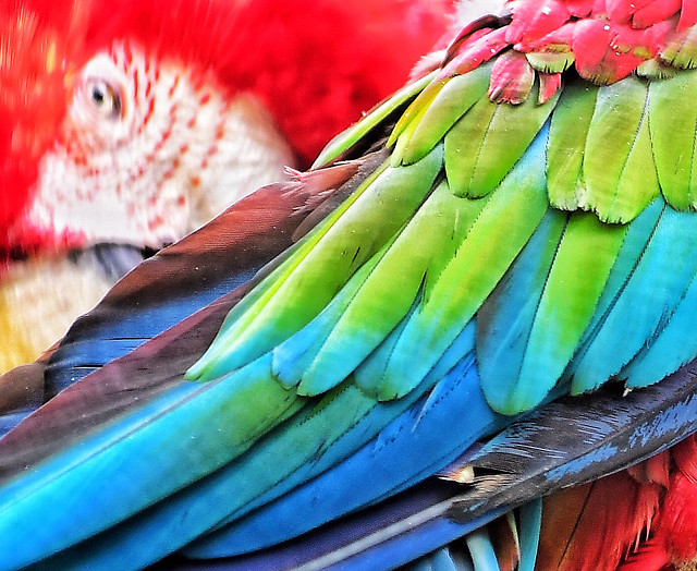 color-parrot-bird-exotic-coloring picture material