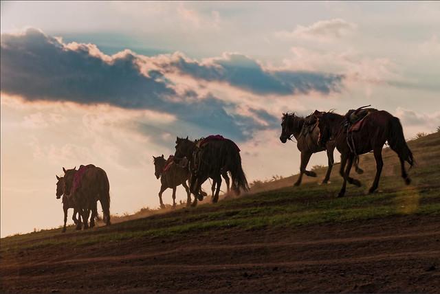 mammal-cavalry-sky-horse-farm picture material