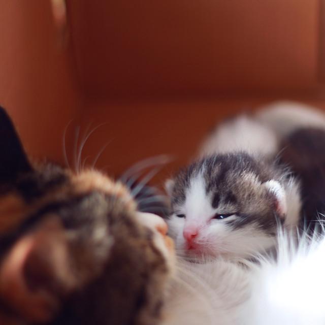 cat-kitten-cute-pet-eye picture material