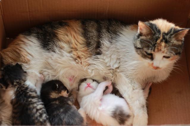 cat-cute-pet-animal-mammal picture material